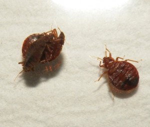 pest control in omaha and lincoln pest solutions 365