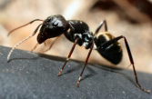 Ants. Pest Solutions 365 can help you get rid of ants.