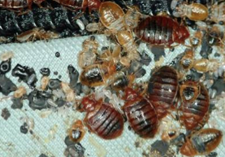 Rxheat To Kill Bed Bugs Pest Solutions 365