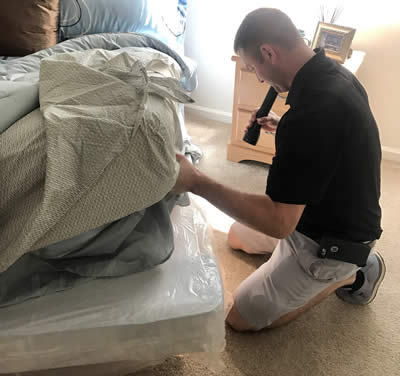 Pest Solutions 365 bed bug inspection