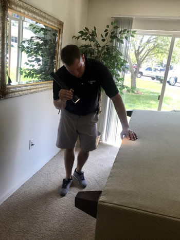 Pest Solutions 365 inspecting sofa for bed bugs